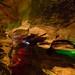 Laurel Caverns 13