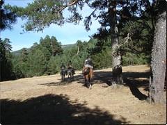 A caballo por la sierra.. (margabel2010) Tags: paisajes caballos rboles personas animales sierras pinos guadarrama bosques airelibre abetos cieloytierra conferas