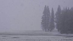 """Tuolumne Meadow - May Snowfall"" (rbeebephoto) Tags: california winter snow storm clouds spring pentax may yosemite yosemitenationalpark sierranevada k5 tiogapass 2015 tiogapassroad tuolumnemeadow tamronaf18200mmf3563ifmacro copyrightrichardbeebe2015 richarddbeebe2015"
