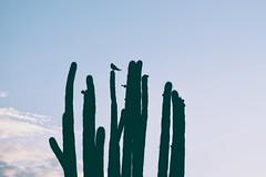 """""""Si estudiaramos a los pjaros, quiz podramos aprender a ser libres"""" -Benjamn Alire Senz. (isabelgc97) Tags: bird landscape colombia paisaje desierto silueta huila desiertodelatatacoa"""