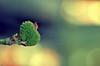 Heartbeat (aquigabo!) Tags: montreal summer nature flora plant life flower dof depthoffield focus canon eos rebel dsrl t5i 700d 50mm composition light aquigabo minimal macro bokeh heartbeat