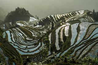 Jiabang rice terraces