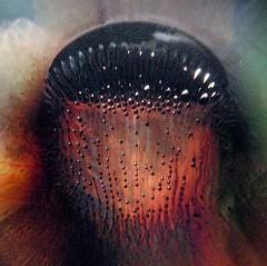 Dark  Medusa (Sea Moon) Tags: black macro texture droplets jellyfish force bell medusa magnetism ridges tentacles ferrofluid