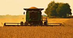 Soybean Harvest (forestforthetress) Tags: color rural illinois beans nikon outdoor farm harvest combine crops farmer agriculture omot enjoyillinois travelillinois