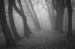 """path-tree-fog-winter-mono"" (Karel Hrouzek P H O T O) Tags: road park winter blackandwhite mist abstract tree nature monochrome fog forest 50mm mono town haze alley woods republic czech path country dew valley minimalism nikkor baw d300 mikulov af18"