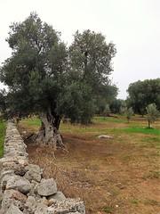 Ostuni - Puglia