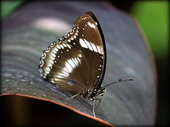Exotica (rufftytufty) Tags: colour beauty leaf legs feeler