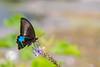 Yulong River butterfly (Bridgetony) Tags: china wild butterfly asia southeastasia guilin yangshuo karst guanxi asiapacific
