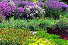 The botanical garden in Balchik, Bulgaria (Stella VM) Tags: flowers garden botanical bulgaria balchik