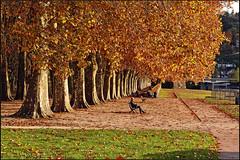 Douce France, L'automne  Besanon. No. 1695. (Izakigur) Tags: helvetia ilpiccoloprincipe lepetitprince thelittleprince nikond700 nikkor nikkor2470f28 besanon france franchecomt autumn jardin trees izakigur topf25 top f250 100faves 200faves 250faves