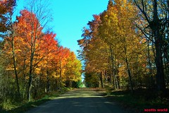 Fall is in the air (SCOTTS WORLD) Tags: adventure america autumn green fun fall october country rural fallcolors vanishingpoint backroads trees sky shadow sunlight light leaves landscape nature michigan midwest 2016 digital drive outdoors outside lapeer red yellow
