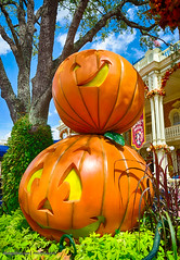 Pumpkins at #MagicKingdom Disney 2014 (Mickey Views) Tags: pumpkin halloween disneyworld magickingdom hdr mainstreet mickeyviews 2014 wdw waltdisneyworld disney disneyphotography mickeysnotsoscary pumpkins outdoors sunlight