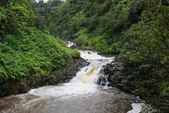 Wailua Iki Waterfall (milepost430media.com) Tags: green trees jungle tropical hawaii maui hana water wet flow stream river waterfall flooded pool pond rocks rainforest beautiful natural nature 70d dslr