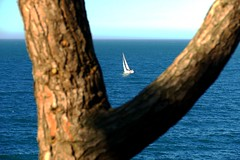 Tirachinas (alfonsocarlospalencia) Tags: tirachinas rbol vela barco cantabria santander mar horizonte azul blanco palacio de la magdalena desenfoque luz encuadre minimalismo