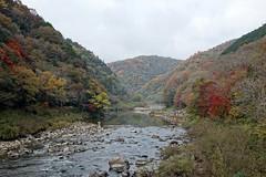 The Muko river (pelican) Tags: dscrx10 mukoriver takaradsuka takedao autumn