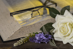 Magnify (darrenball189) Tags: glasses lens vision isolated modern optical background eyeglasses sight eye read reading frame see spectacles focus optic specs elegance magnify magnifier book magnifyingglass blurred blur white rose flower lavender dictionary nikon d610 105mm f28