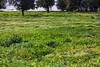 IMG_7818-1 (Andre56154) Tags: spanien spain andalusien andalusia guadalquivir flower wiese ufer flus river baum tree