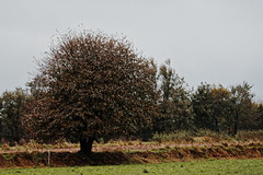 An tree at a willow (malp007) Tags: herbst autumm tree baum color willow weide feld landscape nature tiefenschrfe