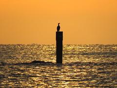 IMG_0076x (gzammarchi) Tags: italia paesaggio natura mare ravenna lidodidante alba animale uccello cormorano monocrome