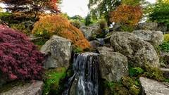 Rock Garden Falls (Stephen Reed) Tags: rhswisley surrey water waterfalls pond autumn garden colour nikon d7000 tamron1024mm lightroomcc