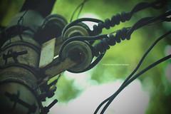INVADOR (Kumar-Shuvrojjwal-Sampad) Tags: mechanical invasion invador nature green piercing blood bloodhasnocolor
