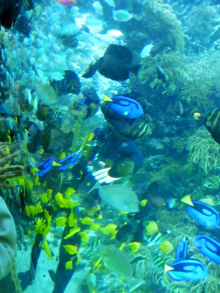 The world 39 s best photos of aquarium and vissen flickr for Jans tropical fish