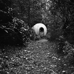 The Discovery (DanRSmith) Tags: bw blackandwhite monochrome mystery object pod woods path rolleiflex 35e xenotar kodaktrix rodinal pushed iso1600