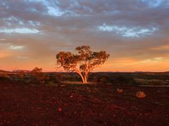 Desert Tree (garry_dav) Tags: matchpointwinner mpt509
