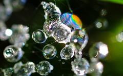 gel 2911 (Yasmine Hens) Tags: drop frost macro extremmacro water hensyasmine namur belgium wallonie europa aaa  belgique blgica    belgio  belgia   bel be