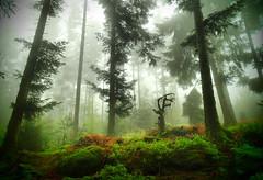 Vosges (denismartin) Tags: denismartin vosges vosgesmountain vogesen forest forestimages tree weather lorraine france