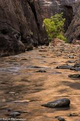 River of Gold (Ralph Earlandson) Tags: narrows zion utah zioncanyon