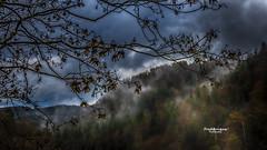 Comme un pome (Tra Te E Me (TTEM)) Tags: lumixfz1000 photoshop cameraraw pluie brume fort arbres nuages gouttes feuilles branches