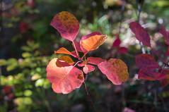 c'est l'automne... (dimz2607) Tags: fort saou automne orange rouge couleurs arbres