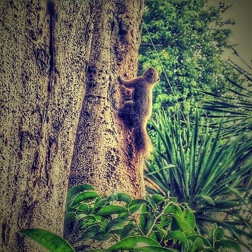 Huuyyy... Tunggu akyuu...   #squirrel #candid