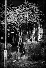 illuminated tree (TheOtherPerspective78) Tags: tree night light illuminated illumination lamp hgm wien vienna dark darkness shadows shade retro barren winter nacht laterne lampe licht schatten beleuchtung beleuchtet arsenal baum schwarz weiss black white schrfentiefe theotherperspective78 canon ef5014