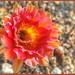 Fall Cactus