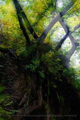 DSCF7202 (kingston Tam) Tags: waterfall river rapids sedimentaryrock stone ancientcity guizhou wetlandpark park canyon landscape naturallandscape mountain scenery streetscape oldfashioned streetphotography castle hawkers peddler fujifilmxt1