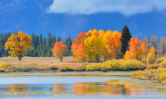 Fall Reflection (MarkWarnes) Tags: bluesky autumn grandteton water grandtetonsnationalpark grandtetons nationalpark reflection snakeriver jacksonhole trees grandtetonnationalpark fall aspen wyoming