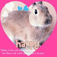 Ichigo san (mensore) Tags:  rabbit bunny netherlanddwarf brown