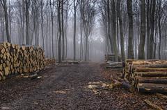 _DSC6017_n (fototaza) Tags: fog tree log road wood autumn