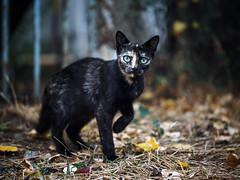 Street cat 173 (Yalitas) Tags: cat cats    kedi chat feline kat katze katzen kot kotka pet felino kottur katte kass kitty gato kocka gatta katzchen canon streetcat