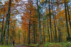 (Cristina Birri) Tags: fornidisopra udine friuli dolomiti montagne mountains autunno autumn