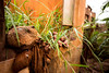 IMG_8338 (caastro) Tags: mariana minasgerais desastre barragemdofundão bentorodrigues paracatu gesteira samarco barralonga
