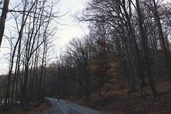 baltimore beauty (emily.wysong) Tags: baltimore maryland road longroad autumn rainy trees adventure vsco vscocam e5 statepark travel autumnleaves nature leaves sky blue park