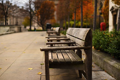 Autumn in London (phrada_kendi) Tags: london nikon nikond750 d750 bench autumn leaves tree trees colours nikkor nofilter nikkor14 nikkor50mm14