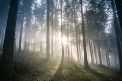 The beauty of november. (roger_popa) Tags: fog foggyday forest trees novembersun sun beams rogerpopa flickr padure noiembrie ceata nor brazi paduredebrad sigma1224 landscape forestlandscape peisaj outdoor mist fir firforest cheia romania nikon nikond300