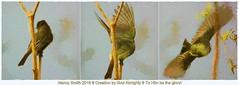 Eastern Phoebe collage (NancySmith133) Tags: easternphoebe lakeapopkanorthshorewildlifedrive centralfloridausa painterly