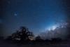 45-Botswana_2016 (Beverly Houwing) Tags: africa botswana desert islandoflostbaobabs kalahari mgadikgadipans saltpan night astrophotograhy sky stars milkyway galaxy wideangle silhouette tree baobab longexposure