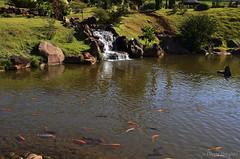 Parque do Japo (eliseteshiraishi) Tags: landscape maring nikon parquedojapo colorful daytime nikond5100 outdoor peixeornamentais peixes traveldestination tree paran brasil aoarlivre beiraderio lago cursodegua gua paisagem riacho rio leito de leitoderio