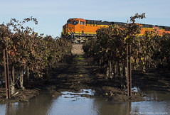 Dormant (Patrick Dirden) Tags: bnsf4290 es44dc gevo ge generalelectric diesel locomotive engine rail railroad train freighttrain freight cargo bnsf bnsfrailroad bnsfrailway burlingtonnorthernsantaferailroad burlingtonnorthernsantafe bnsfstocktonsub stockton stocktonca vineyard dormant sanjoaquincounty sanjoaquinvalley centralvalley northerncalifornia california